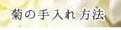 菊の手入れ方法