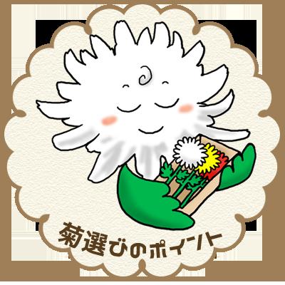 菊選びのポイント